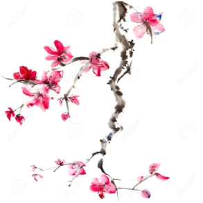 Cerisiers en fleurs initiation Reiki Provence